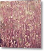 Briza Media Limouzi Decorative Quaking Grass Metal Print