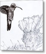 Broadbilled Hummingbird Metal Print