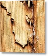 Broken Old Stump Spruce Metal Print