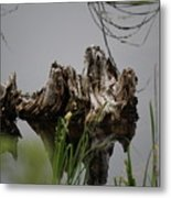 Broken Root Stump In Water  Metal Print