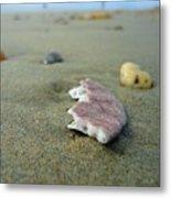 Broken Sand Dollar - Low Tide At Manhattan Beach Metal Print