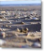 Broken Shells Metal Print