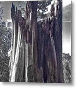Broken Tree Metal Print