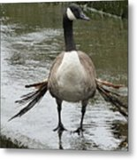 Broken Winded Goose On Lower Weir Metal Print