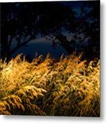 Brome Grass In A Field Near Princeton Metal Print