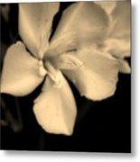 Bronze Frost White Flower Metal Print