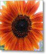 Bronze Sunflower No 2 Metal Print