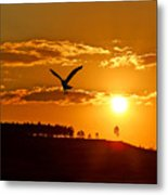 Bronze Sunset Metal Print