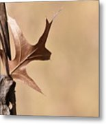Bronzed Oak Leaf Horizontal Metal Print