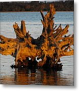 Bronzed Wood Metal Print