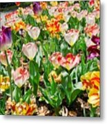 Brookgreen Gardens Tulips Metal Print