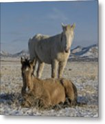 Brother's  Metal Print by Nicole Markmann Nelson