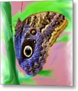Brown And Blue Butterfly 2 Metal Print