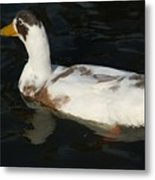 Brown And White Duck Metal Print