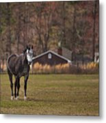 Brown And White Horse Metal Print