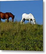 Brown And White Horse Grazing Together In A Grassy Field Metal Print