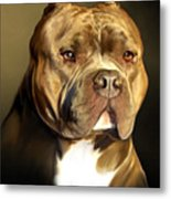 Brown And White Pit Bull By Spano Metal Print by Michael Spano