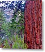 Brown Bark Metal Print