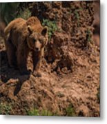 Brown Bear Watches From Steep Rocky Outcrop Metal Print