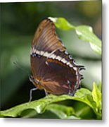 Brown Beauty Metal Print