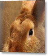 Brown Bunny And Whisker's Closeup Metal Print