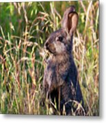 Brown Bunny Metal Print