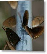 Brown Butterflies Metal Print