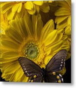Brown Butterfly On Yellow Daisies  Metal Print