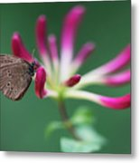 Brown Butterfly Resting On The Pink Plant Metal Print