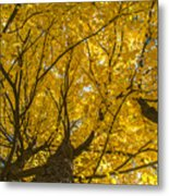 Brown County Colors Metal Print