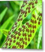 Brown Dots on Green Fern  Metal Print