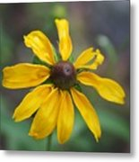 Brown-eyed Susan Metal Print