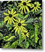 Brown-eyed Susans II Metal Print