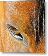 Brown-eyed Wild Horse Metal Print