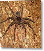 Brown Fishing Spider Metal Print