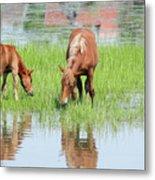 Brown Horse And Foal Nature Spring Scene Metal Print