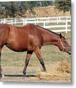 Brown Horse Eating Hay Ranch Scene Metal Print