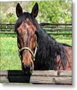 Brown Horse In A Corral Metal Print