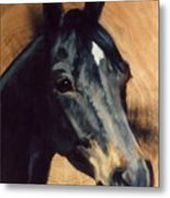Brown Horse  Tingeys Star Metal Print
