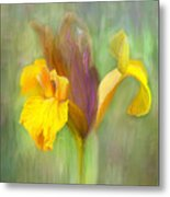 Brown Iris Metal Print