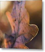 Brown Leaf Metal Print