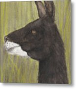Brown Llama Profile Cathy Peek Farm Animal Art Metal Print