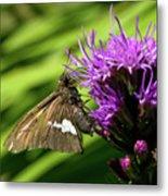 Brown Moth On Pink Metal Print