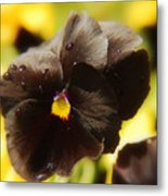 Brown Pansy Metal Print
