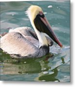 Brown Pelican In The Bay Metal Print