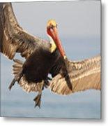 Brown Pelican Putting On The Brakes Metal Print