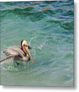 Brown Pelican Metal Print