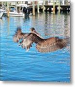 Brown Pelican Taking Flight Metal Print