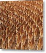 Brown Pelican Wings Metal Print