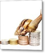 Brown Snail Climbing To The Top Of The Pile Of Coins  Metal Print